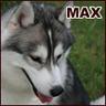 husky_max
