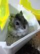 hamsterblog