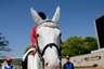 equus_hooftrace