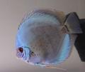 nobupapa60