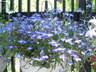 garden1407