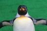 penguinplace