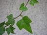 leaf-october