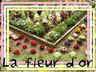 la-fleur-d-or