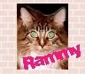 rammy-z