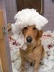 dog-school-arcadia