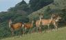 wildlifecontents