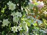 flower22cat22
