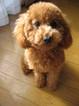 dog-love-0404