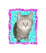 cat0819