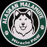 miracle_paw