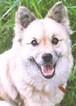 kayo_hearingdog
