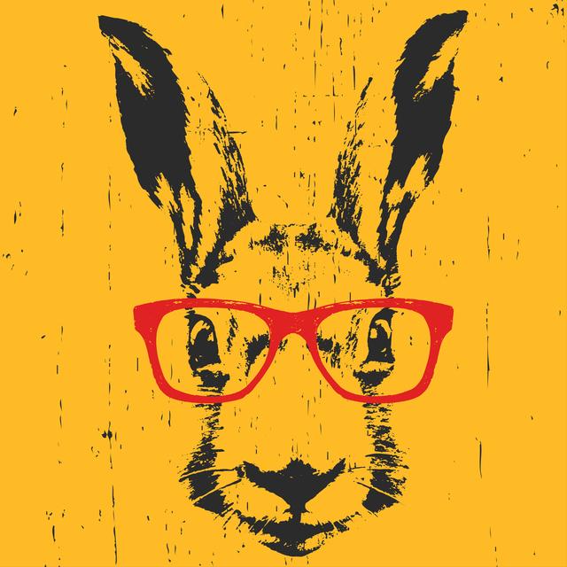 rabbitphoto