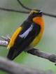 wildbirdlove