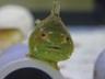 kaiteifish