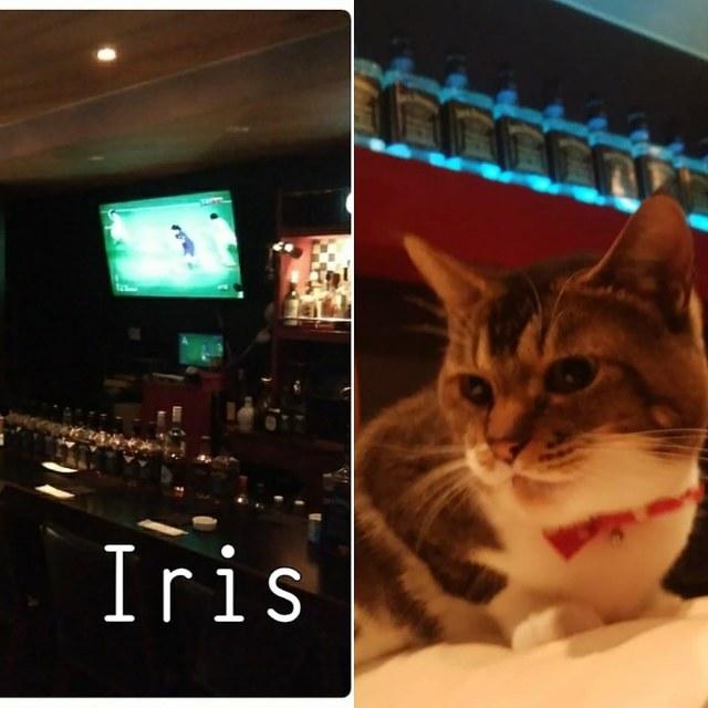 iris-sendai