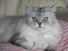 kitty_nya_nya