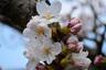 snowflower2006