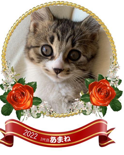 misia_2005