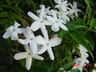 jasmine-aroma