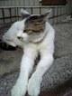 rolfer_2006