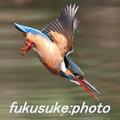 fukusuke-photo