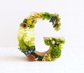 green_orangetea