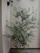olive-0505