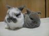 arpas-rabbitry