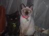 catdoglover