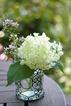 lavender050letter