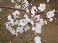spring1009