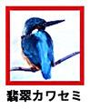 hisui-kawasemi39