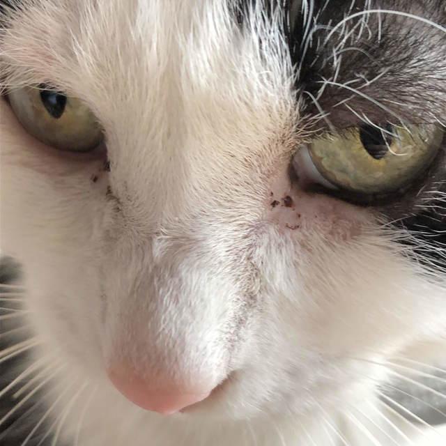 cat317