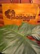 aromahealing-manggis