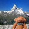 travelling_bear