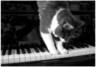 pianoforte_societe