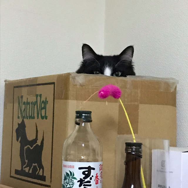 mint-beer