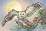 owl2960_1951