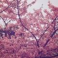 nanayama_381