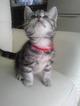 qoo_cat