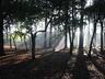 foresta440