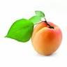 apricotaroma
