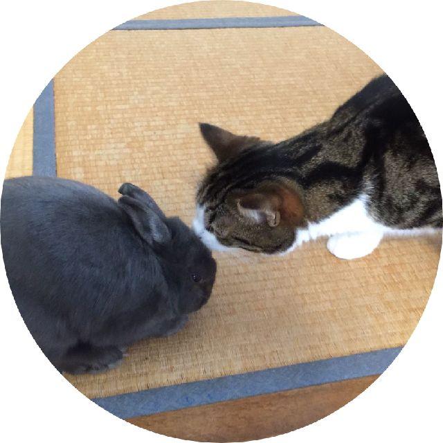 rabbit-mimi