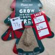 鉢に蒔かれて発芽が待たれる忘れかけられていたクリスマスツリーのタネと隣家の花壇の育ちすぎクリスマスツリー