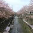 葉桜お花見