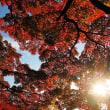 紅葉の地にぽっかりと、空の湖。