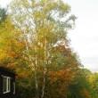 昨日と同じ木
