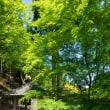 新緑の大原
