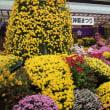 東武亀戸線・小村井駅から亀戸天神社の菊祭りへ